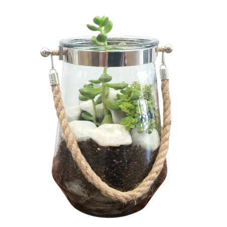Roped Hurricane Terrarium (24hrs notice required)